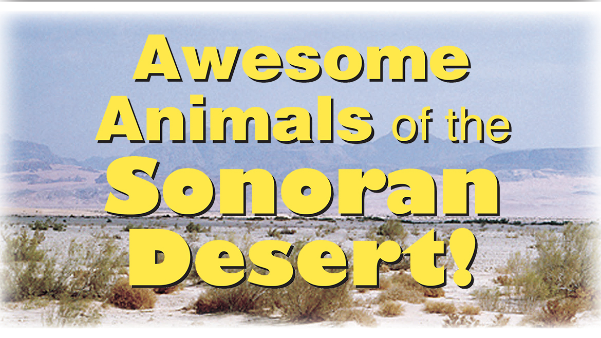 Awesome Animals of the Sonoran Desert!