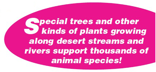 Special trees and other kinds of plants growing along desert streams and rivers support thousands of animal species!