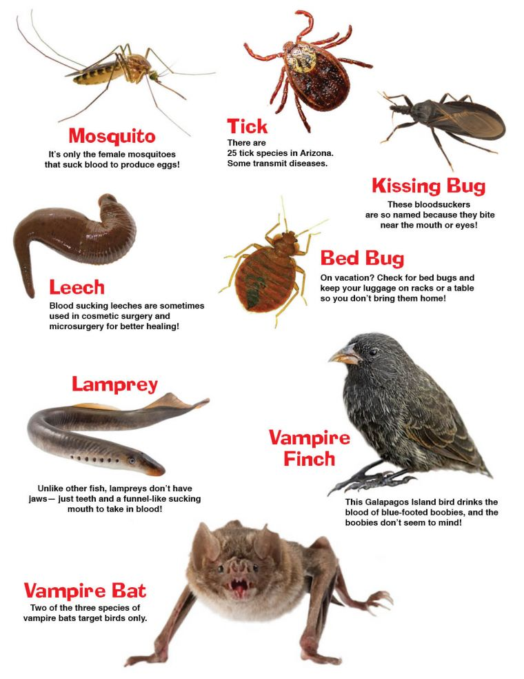 Bat, Bed Bug, Kissing Bug, Lamprey, Leech, Mosquito, Tick and Vampire Finch