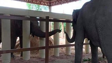 Two elephants separated by fence. Trunks reaching out to each other.