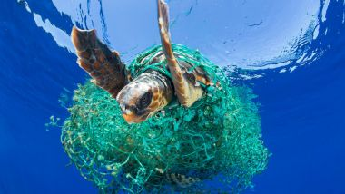 A sea turtle struggles through ghost nets